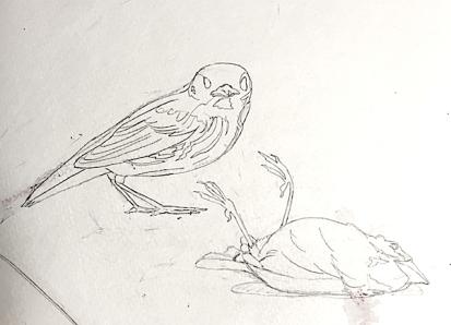 sandybirds.jpg